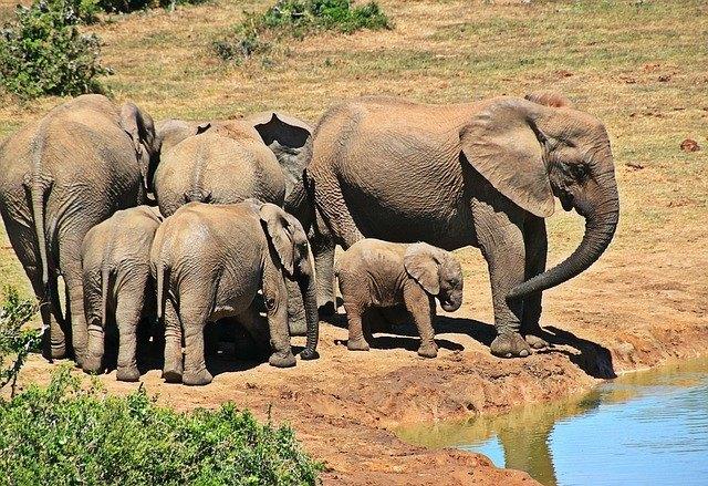 elephant-1092508_640