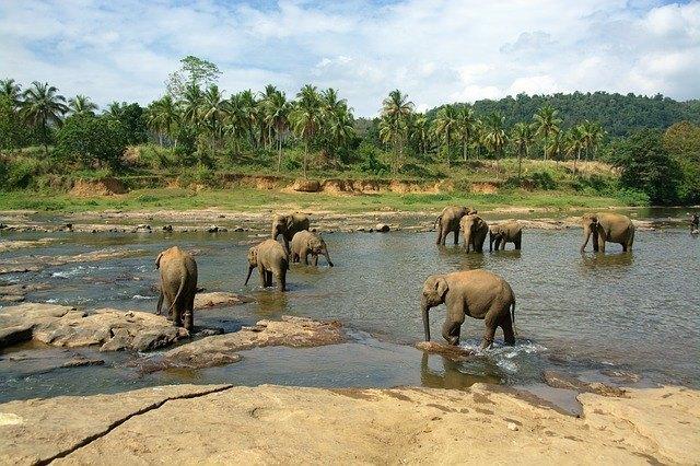 elephants-683709_640